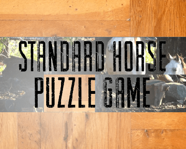 Cool Horse Puzzle